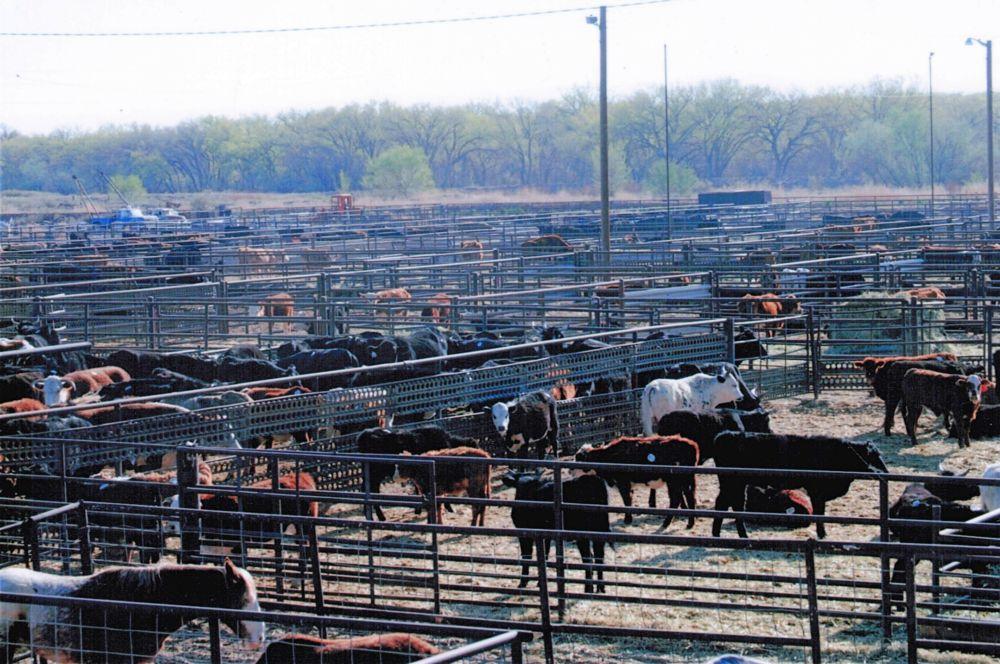 cattlemens livestock auction